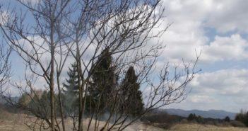 Wypalona trawa na łące w Nowej Białej