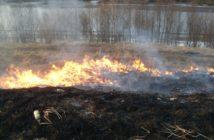 Niebezpieczne wypalanie traw, paląca się ściółka leśna